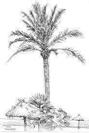 die besten 25 palm tree sketch ideen auf pinterest palme