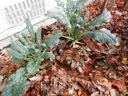 protecting your winter vegetable garden russell nursery