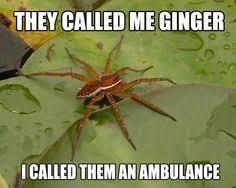Sad Spider Meme - sad cute meme google search loves pinterest meme
