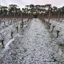 winter time for the vines to rest wilimee wines