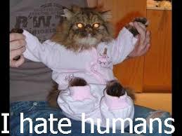 Cat Suit Meme - funny caturday pictures gallery ebaum s world