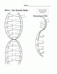 Dna Structure And Replication Worksheet Key Dna Coloring Page Coloring Home