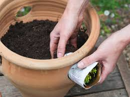 Kitchen Herb Pots by How To Grow Herb Pots Planting Herbs Hgtv