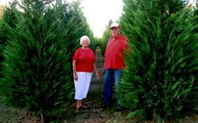 duncan christmas tree farm and gift shop in selmer tn tennessee