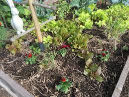 ann u0027s fall gardening tips south laguna community garden park