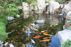 water quality quidelines for koi ponds water garden pinterest