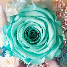 teal roses preserved in glass dome apollobox