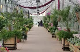 Denver Botanical Gardens Denver Botanic Museum Orchid Showcase One Hundred Dollars A Month