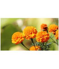 Flower Seeds Online - creative farmer fs0001001 flower seeds buy creative farmer