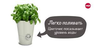 herb pots for windowsill emsa fresh herbs herb pot u2014 fresh herbs for weeks ru youtube