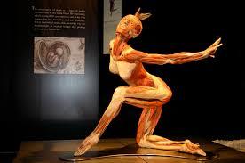 Human Anatomy Martini Gunther Von Hagens 18 Pinterest Wax Art Anatomy And Art Model