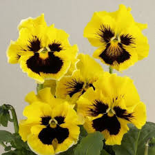 625 best flowers images on pinterest flowers flowers garden and