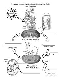 Photosynthesis And Cellular Respiration Worksheet 69 Best Photosynthesis Cellular Respiration Images On