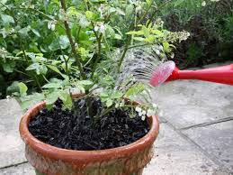 Outdoor Pots And Planters by How To Plant Blueberry Pots Hgtv