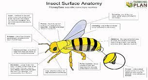Surface Anatomy Eye Honey Bee Body Parts Farming Plan