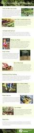 vegetable gardening for beginners 1 jpg