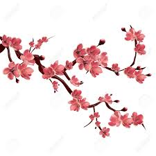 branch of blossoming japanese cherry tree vector