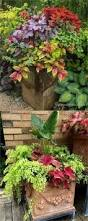 best 25 shade garden plants ideas on pinterest shade plants