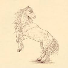 how to draw animals horses their anatomy and poses
