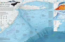 Subway Map Manhattan Stunning Illustration Shows The Sea Creatures Off Of Manhattan