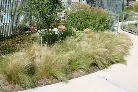 ornamental grasses and companion planting