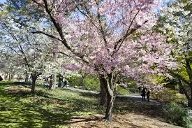 New York nature activities images Best things to do in spring in nyc from festivals to street fairs jpg