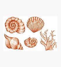 Assorted Seashells Assorted Seashells Wall Art Redbubble