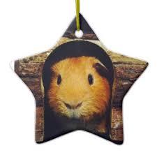 mona two guinea pigs ceramic ornament zazzle
