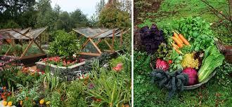 sobeanie vegetable gardening