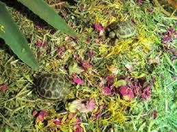 Tortoise Bedding Readi Grass Flower U0026 Plant Mix 1kg Bedding Food Free Post