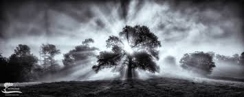 tree of light the farm master s peace photography