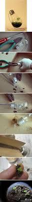 best 25 light bulb terrarium ideas on light bulb