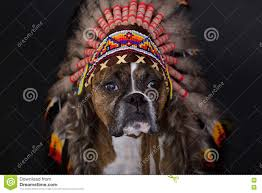 thanksgiving indian chief thanksgiving indian headdress stock photos image 11653513