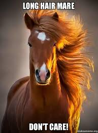 Long Hair Dont Care Meme - long hair mare don t care ridiculously photogenic horse make a meme