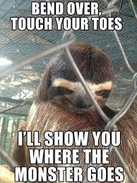 Fitness Sloth Meme - some sloth stuff album on imgur