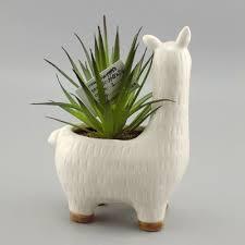 cute plant vase and planter cute llama alpaca plant pot with filled plants