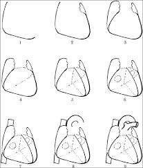 Gross Anatomy Of The Human Heart The Steps For Drawing A Sketch Of Human Heart 1 Right And