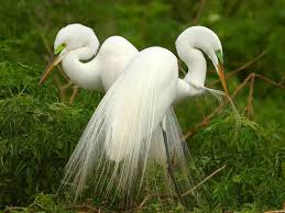 beautiful birds images free beautiful white birds wallpaper