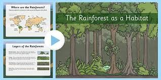 rainforest as habitats powerpoint the rainforest habitats