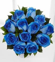 blue roses delivery dozen boxed blue roses gta flower delivery