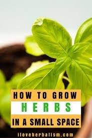 74 best potted herb garden images on pinterest