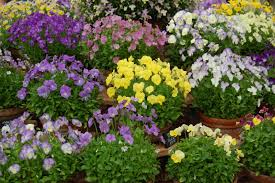 10 of the easiest plants to nurture heiton buckley blog