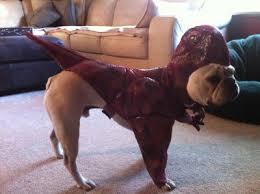 velociraptor costume animal planet raptor pet costume buycostumes
