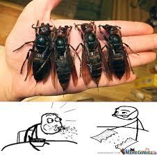 Damn Nature You Scary Meme - damn nature you scary by colorguardgirl13 meme center