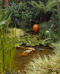 Zen Water Garden Water Lilies And Graceful Koi Give This Zen Water Garden The