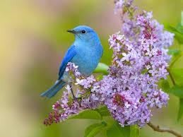 Flower And Bird - for your desktop flowers and birds wallpaper 41 top