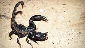 dreams about scorpions meaning and interpretation