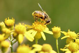 bee pollen is helping us make better batteries