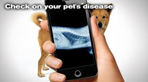 x ray dog simulator android apps on google play