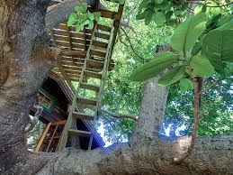 8 vacation rentals where you can spend the night in the trees